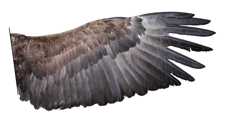 eagle-wing